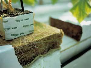 Выращивание на базальтовой вате 67