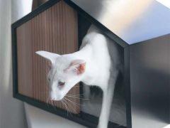 Интерьерный домик Effect кошка собака станок Jet Powermatic Triton Groz инструмент струбцина