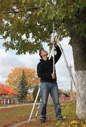 обрезка дерева электробезопасность