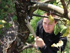 Обрезка деревьев: Raco Expert