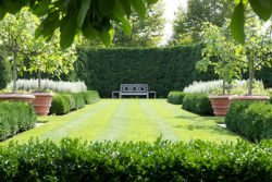живая изгородь забор из кустов