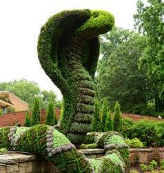 кусты скульптуры живые растения
