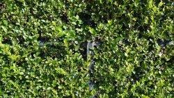 забор декорировать как растения кусты