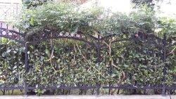 декорировать забор купить кусты