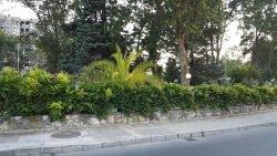 фото растения декорировать забор