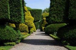 живая стена как выбрать растения