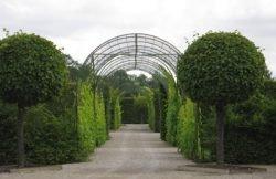 декорировать забор какие растения