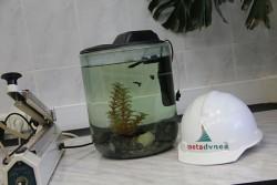 06_рыбки