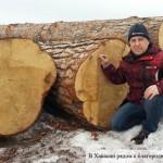 Александр Гончаров: в Хакасии рядом с благородным кедром