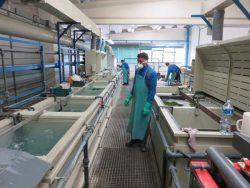 IB Rubinetti Rubinetterie смеситель душ кран хромирование Италия фабрика завод