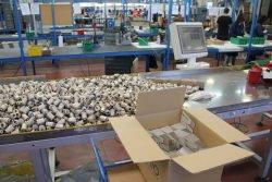 Gnutti Cirillo Tiemme упаковка визуальный контроль продукция цех фабрика завод Lumezzane Italy Лумедзане Италия