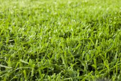 Как вырастить английский газон: А. В. Раппопорт, замдиректора Ботанического сада МГУ, и Gardena