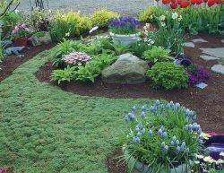 альтернативные газоны растения отзывы посадка