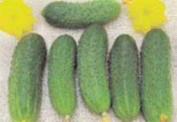 огурцы отзывы фото f1 Печора