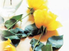 лучшие сорта отзывы обзор чайно гибридная роза