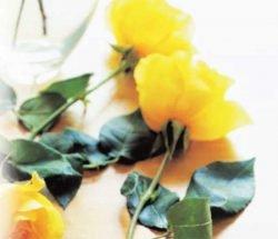 сорта роз какие лучши чайно-гибридные