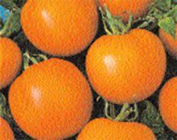 необычные сорта томатов фото Кавалер