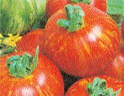необычные сорта томатов фото Тигровый