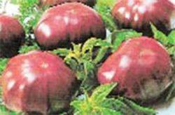 необычные сорта томатов фото Черный Принц