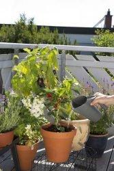 Многофункциональный кувшин Gardena полив вскапывание почва Домашнее садоводство комплект
