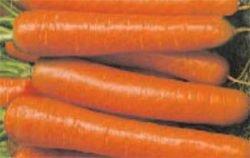 семена моркови отзывы Финкор