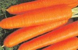 семена моркови отзывы Леандр