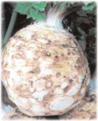 отзывы посадить рассада портулак сельдерей базилик