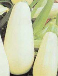 кабачки сорта отзывы фото описание Ролик