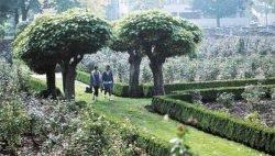 живая изгородь своими руками отзывы растения описание фото