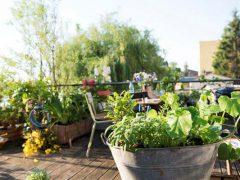 Gardena рецепт цветочный полезный вкусный
