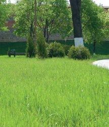 отзывы обзор травосмеси для газона