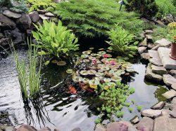 пруд на даче купить своими руками растения