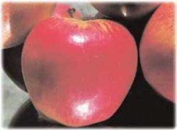 яблоня саженец отзывы лучшие Строевское сорта