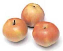 отзывы сорт яблони Антей лучшие сорта