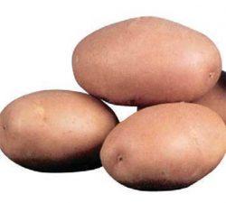 Импала картофель картофеля обзор сортов