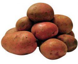 Бимонда какой посадочный материал картофеля лучше