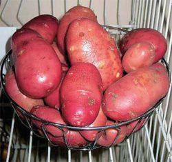 Ред Скарлетт сорта картофеля фото