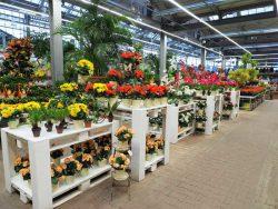 Obi Оби ремоделинг растения зеленый рай гипермаркет сеть