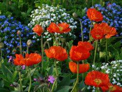 однолетники многолетники цветы растения для сада