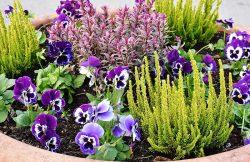 однолетние многолетние растения список