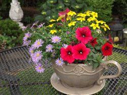 цветы для сада красивые фото
