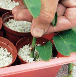 агроперлит вермикулит субстрат черенок