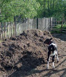компост сапропель торф навоз удобрение питание растений