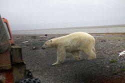 Makita аккумуляторный инструмент оснастка Арктике фоторепортаж