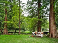 Наш лес Посади свое дерево Stihl Штиль посадка деревья парк бензопила пила цепная