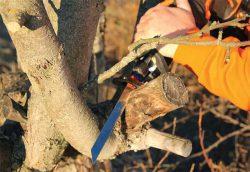 подрезка яблонь садовых кустарников сабельной пилой тест