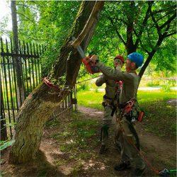 Семинар Husqvarna Хускварна Московская школа уход за деревьями Здоровый лес июль 2020