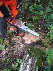 Husqvarna помогла расчистить Лосиный остров от поврежденных деревьев